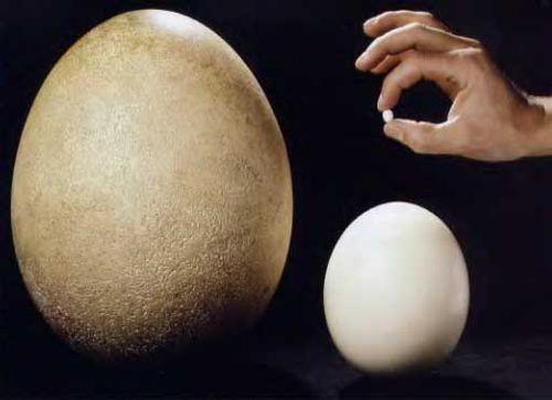 яйцо2