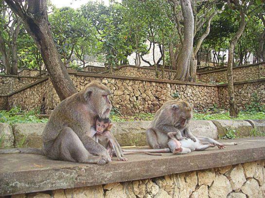 Вездесущие обезьяны_2