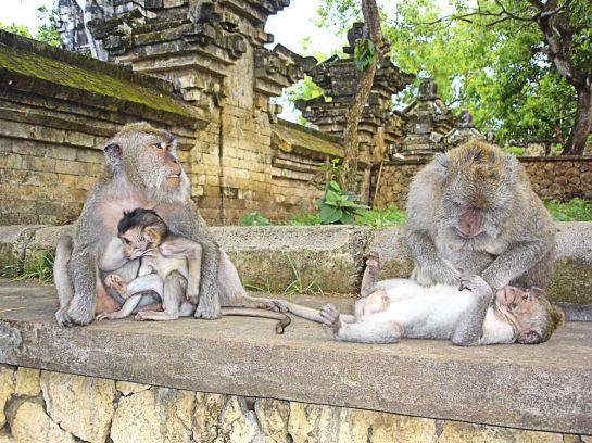 Вездесущие обезьяны_1