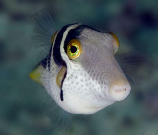 snorkling_surin_fish