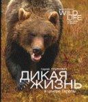 dikaya_zhizn_v_centre
