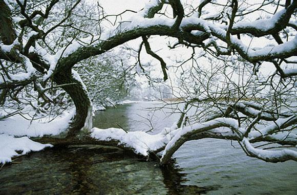 derewo-pod-snegom