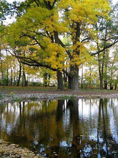 Lake-in-the-garden