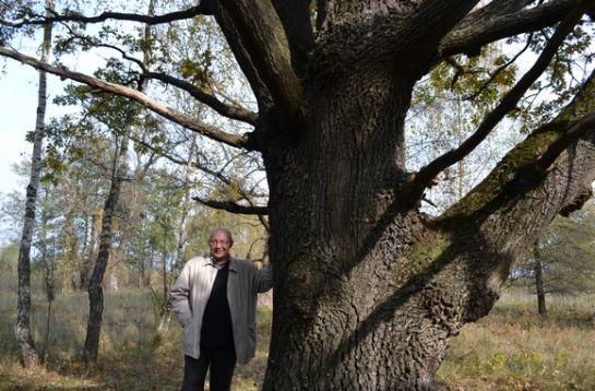 200летний дуб