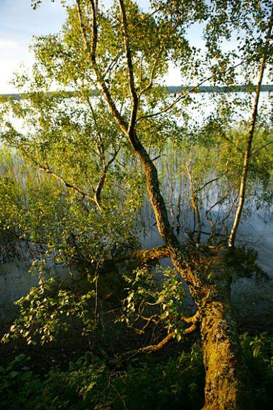 Дикое озеро Свитязь
