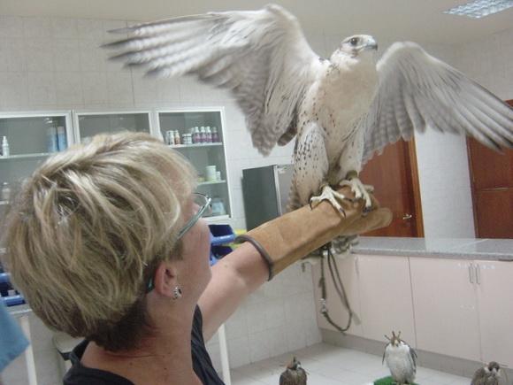 falcon hoslital